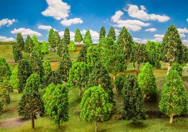 10 Laubbäume, sortiert